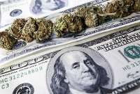 dollar cannabis